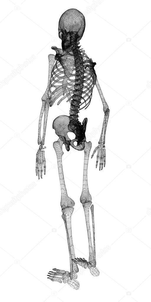 Menschlichen Körper, Skelett — Stockfoto © Podsolnukh #58454401