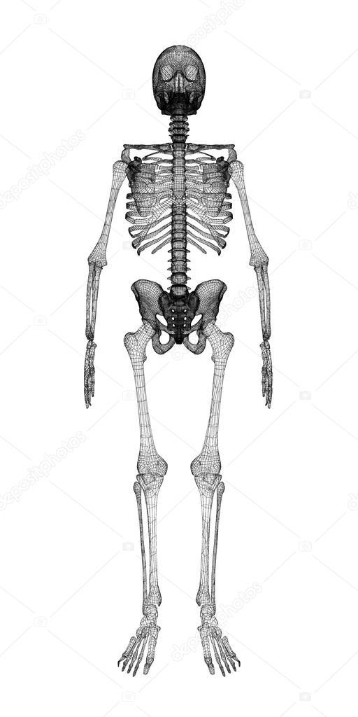 Cuerpo humano, esqueleto — Fotos de Stock © Podsolnukh #58454577