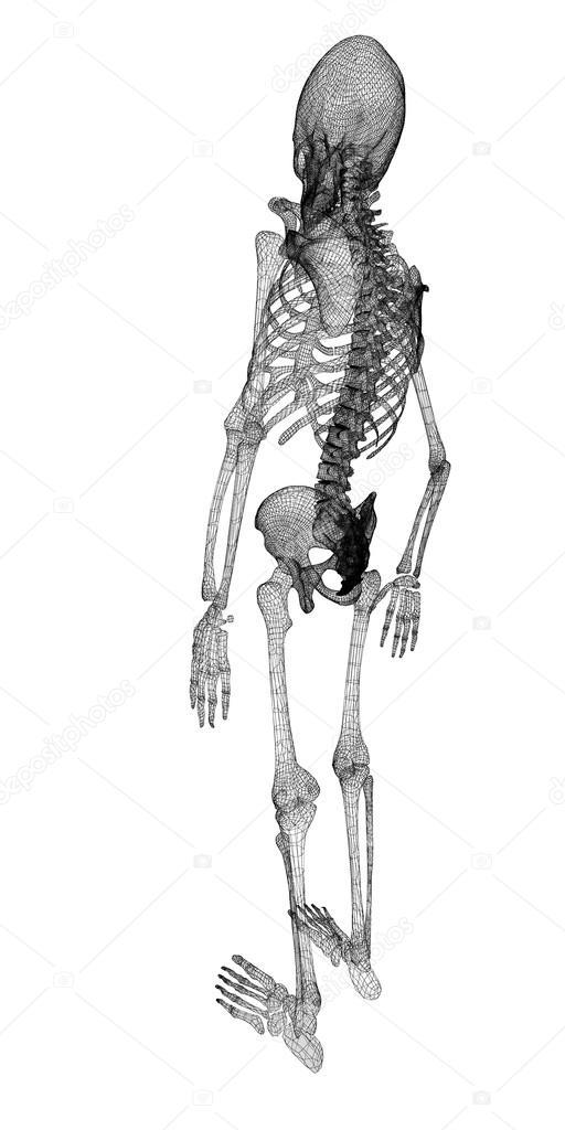 Menschlichen Körper, Skelett — Stockfoto © Podsolnukh #58455521