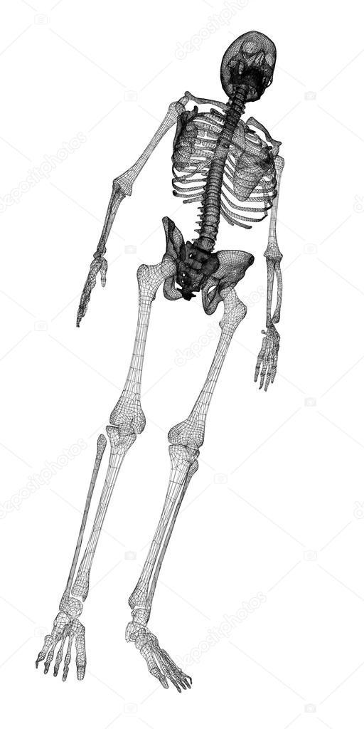 Menschlichen Körper, Skelett — Stockfoto © Podsolnukh #58455613