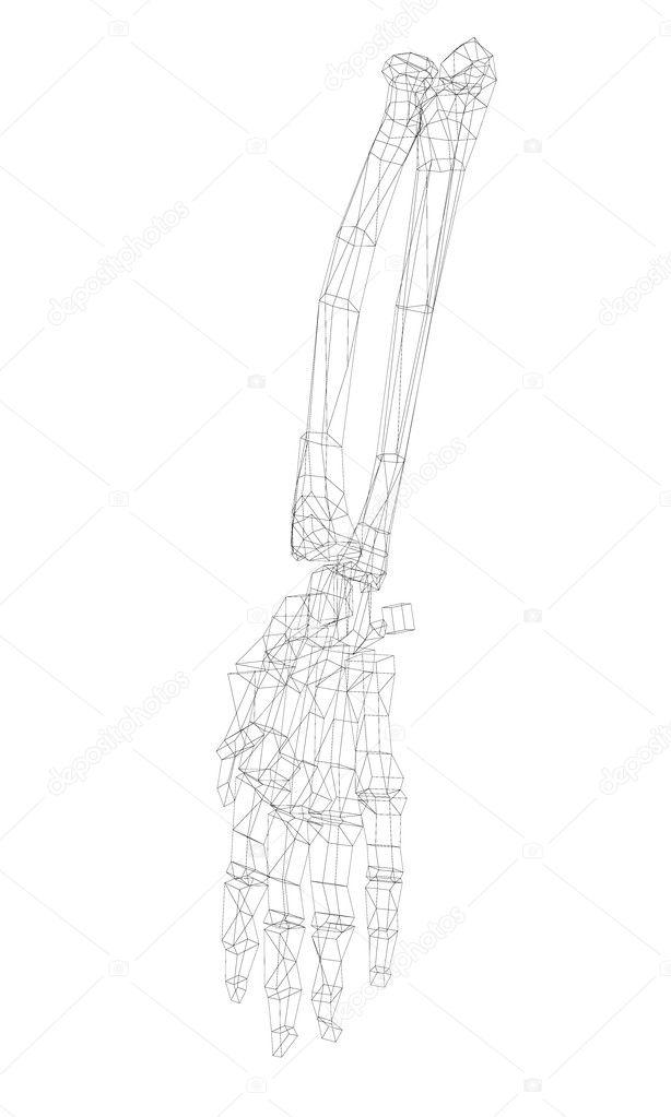 Esqueleto de la mano humana — Fotos de Stock © Podsolnukh #98862102