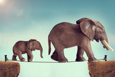 Fotografie Mutter und Baby-Elefanten auf einem Hochseil
