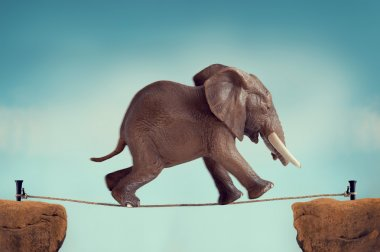 elephant running across a tightrope