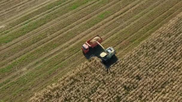 Kombinálja a betakarító érett kukorica a területen, és öntsük a teherautó lakókocsi