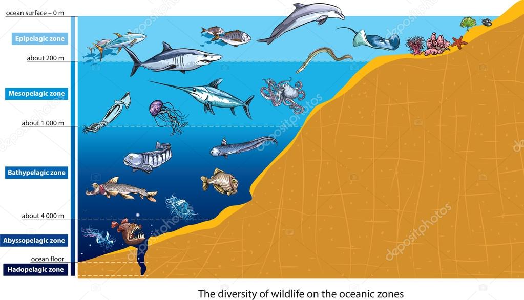 Oceaan Zones Stockvector 169 Lukaves 56177781