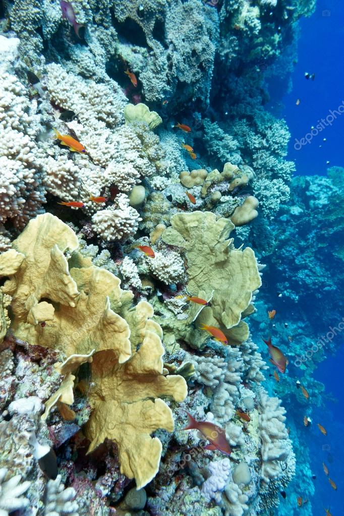 Colorful coral reef with hard corals and exotic fishes at the bo