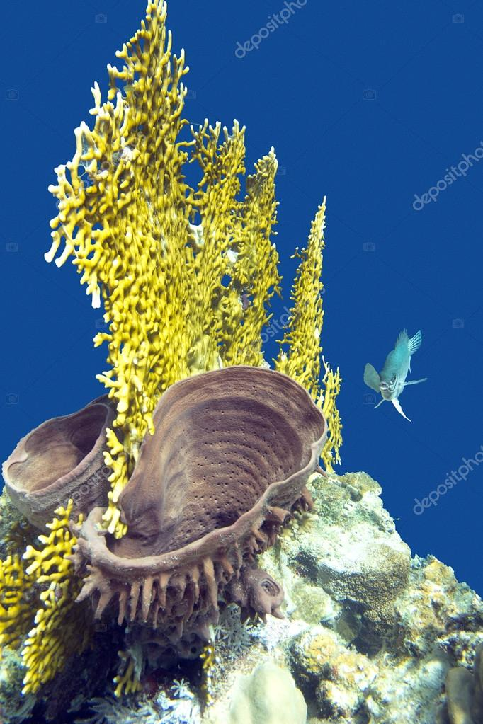 Coral reef with fire coral and sea sponge in tropical sea