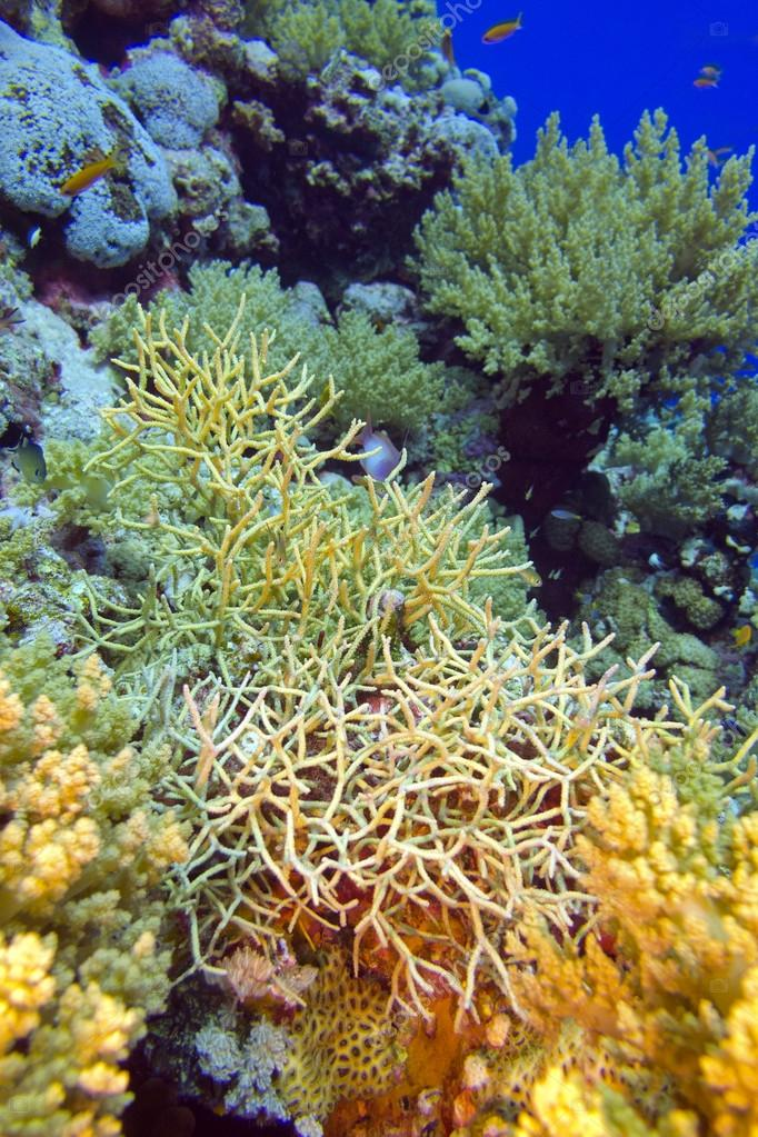 colorful coral reef with stony corals, underwater