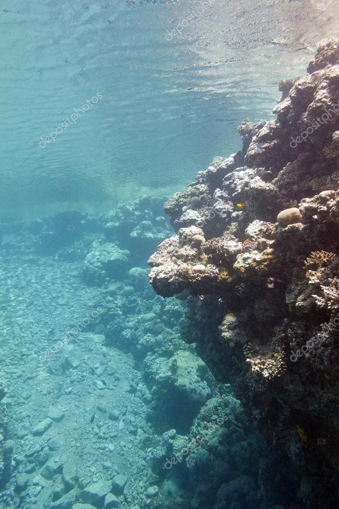 coral reef under the surface of water in tropical sea