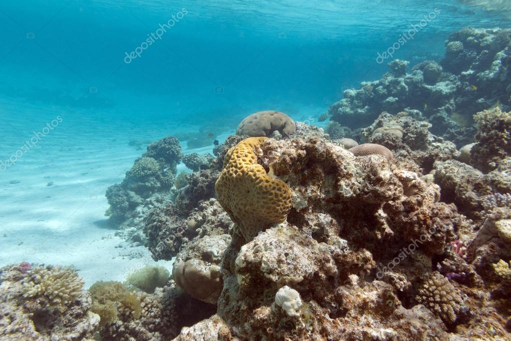 coral reef under the surface of water in tropical sea,  underwa