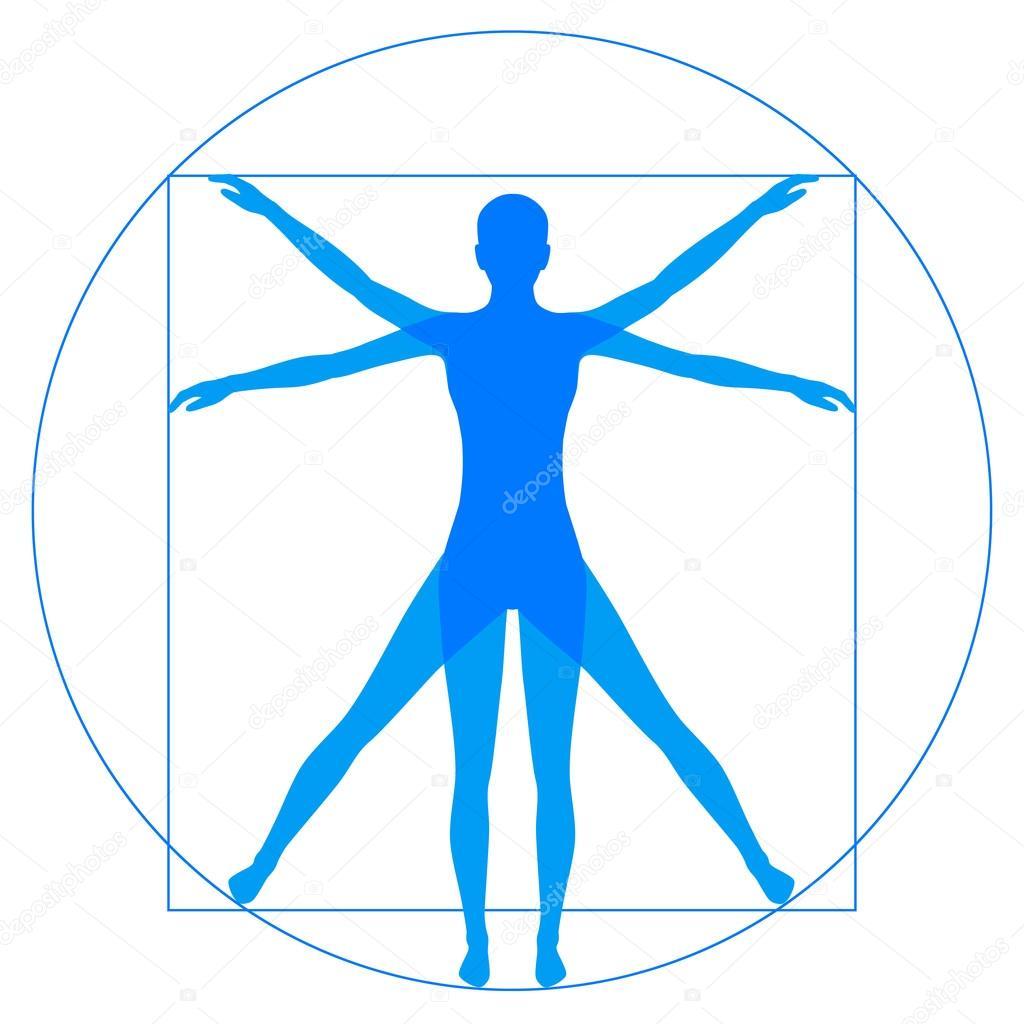 Hombre de Vitruvio, anatomía humana — Vector de stock © eveleen ...