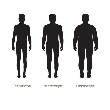 Body male types,