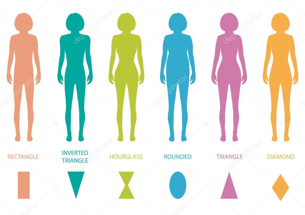 Female Body Types Anatomy Stock Vector Eveleen 67271091