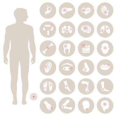 Human anatomy, body pain