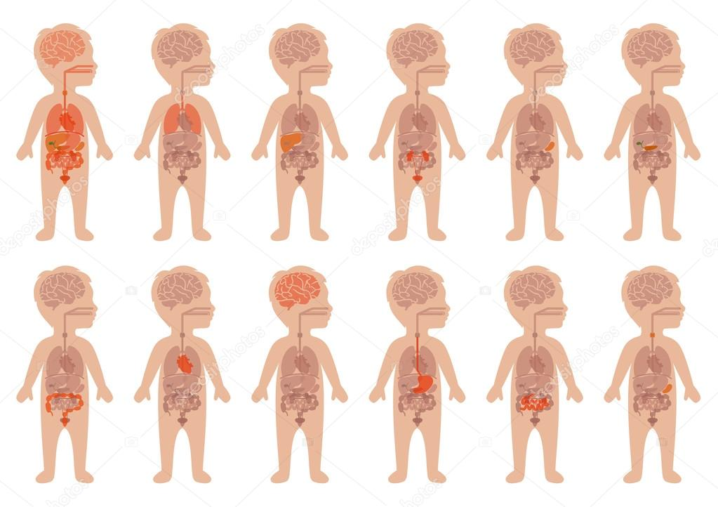 órganos humanos, anatomía de niño — Archivo Imágenes Vectoriales ...