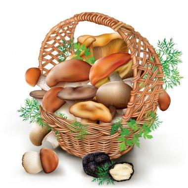 mushrooms in a wicker basket