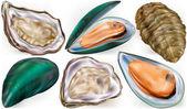 Muscheln und Austern
