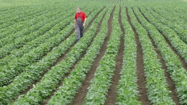 Zemědělství, zemědělci v sojových bobů pole
