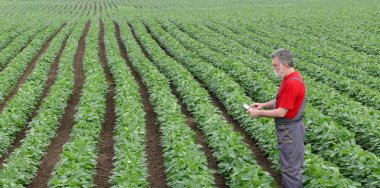 Farmer or agronomist in soy field with tablet