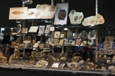 Stand in a fossils exhibition