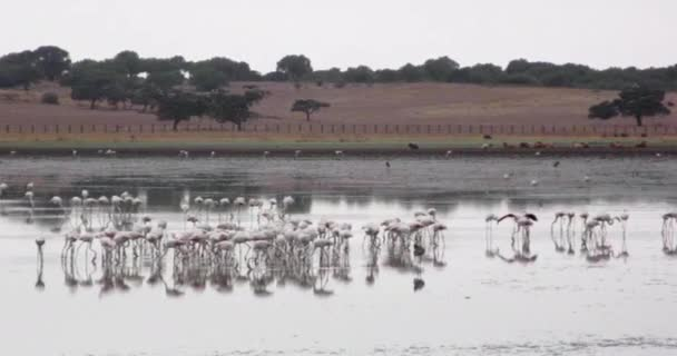 Cinemagraph of a Landscape of a lake with birds at dawn where three birds move while the rest remains still