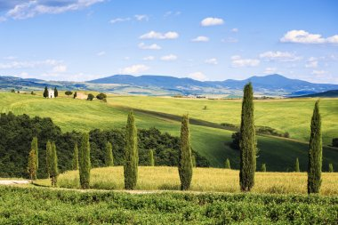 Tuscany, italian rural landscape, cypress trees Vitaleta chapel on background, little church in Val d Orcia, Italy stock vector