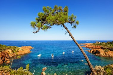 Esterel, tree, rocks beach coast and sea. Cote Azur, Provence, F