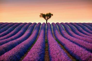 """Картина, постер, плакат, фотообои """"лаванда и одинокое дерево на закате. прованс, франция """", артикул 83173556"""