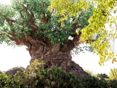 The Tree of Life in the Animal Kingdom Park, Disney World, Flori
