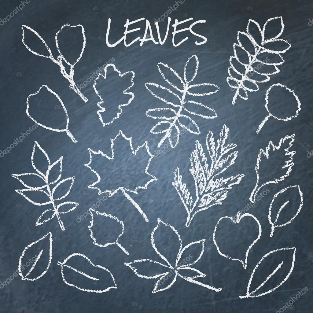Collection of chalk leaves