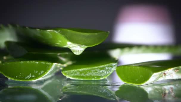Aloe Vera Blumen- und Sahnetopf mit frischem Blatt.