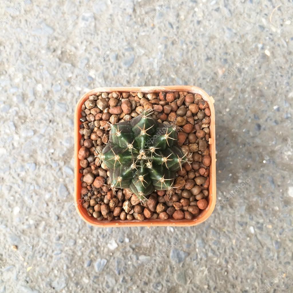 Petit Cactus Decoratifs En Petit Pot Vue De Dessus Photographie