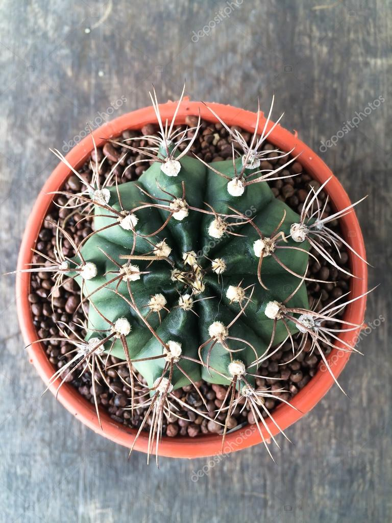 Petit Cactus Decoratif En Pot Rond Vue De Dessus Photographie