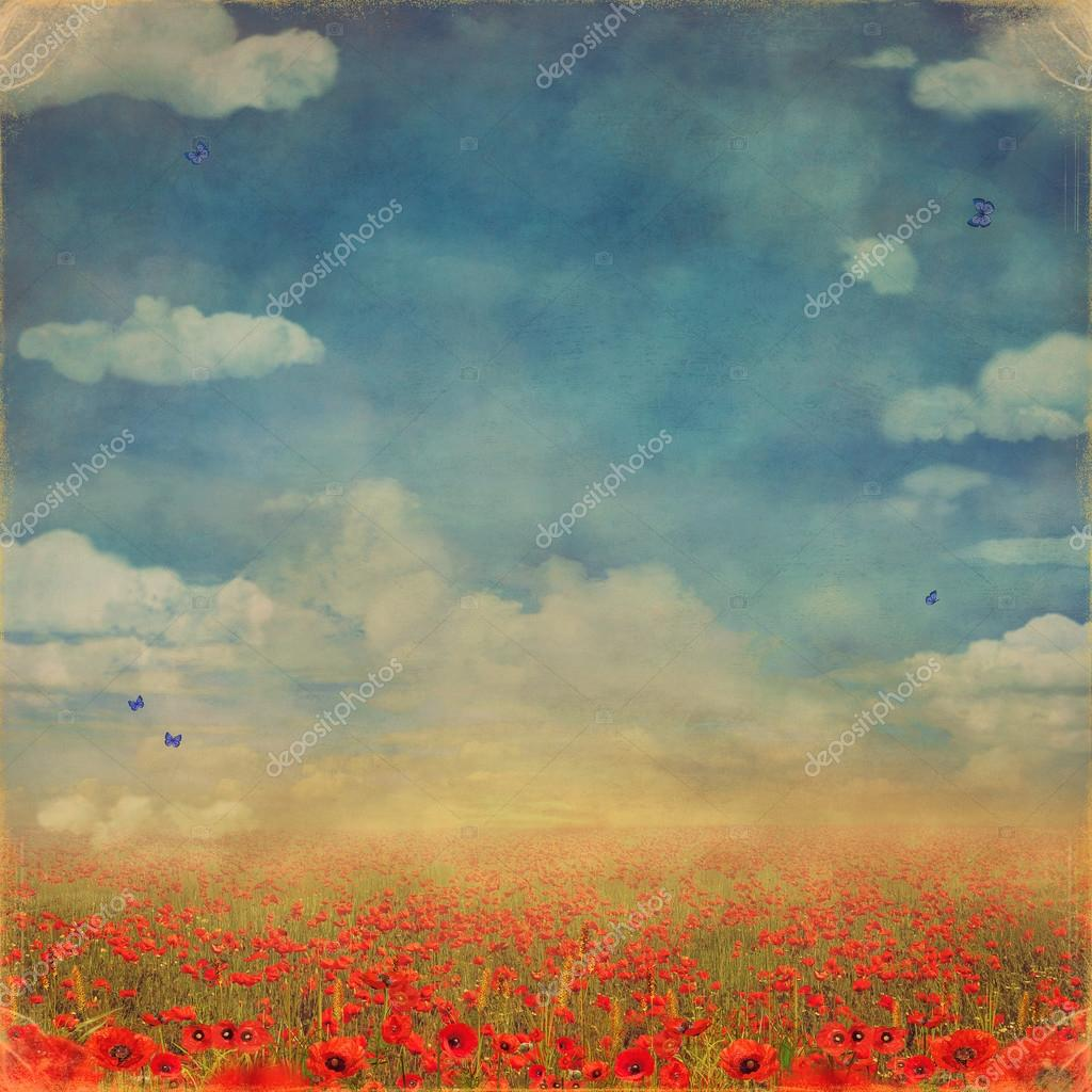Red poppies field with blue sky