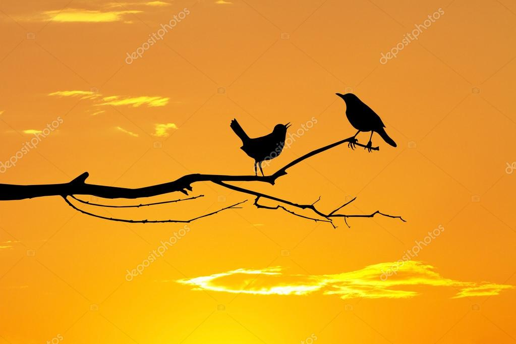 birds in love on branches