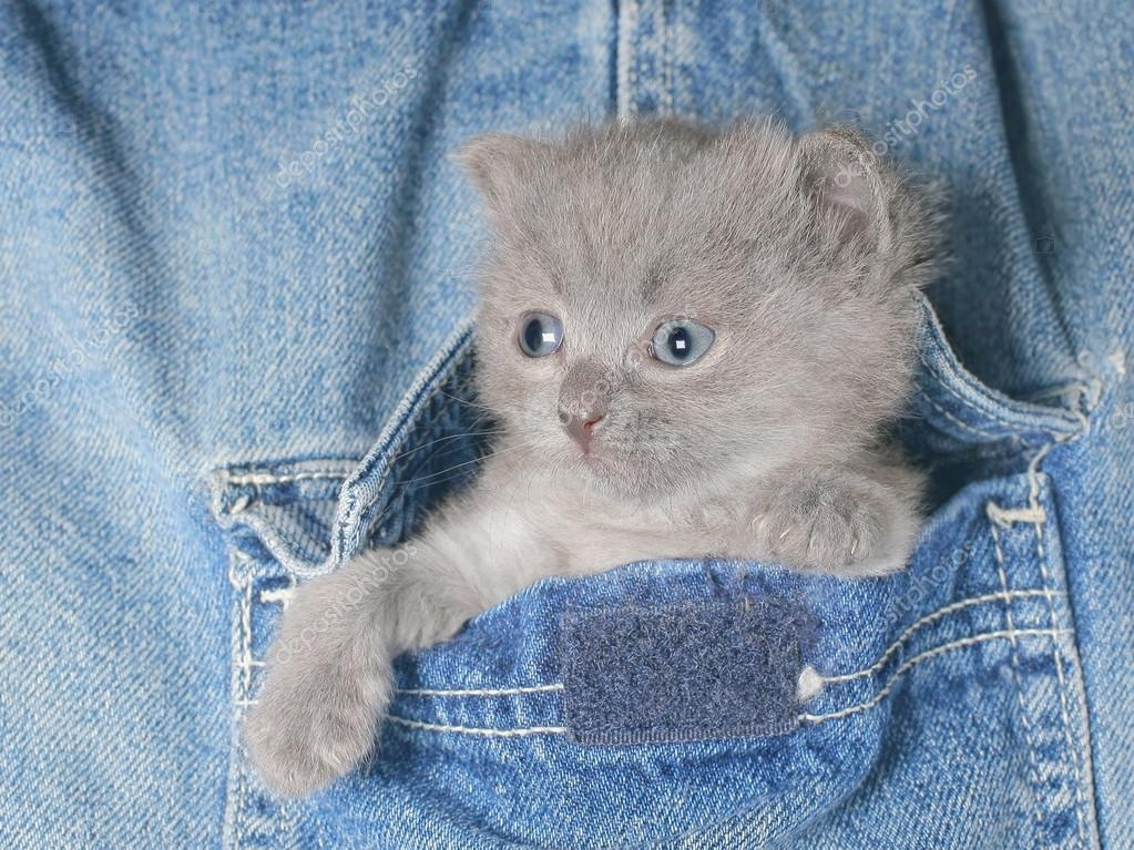 картинки котят в джинсах таковым остался