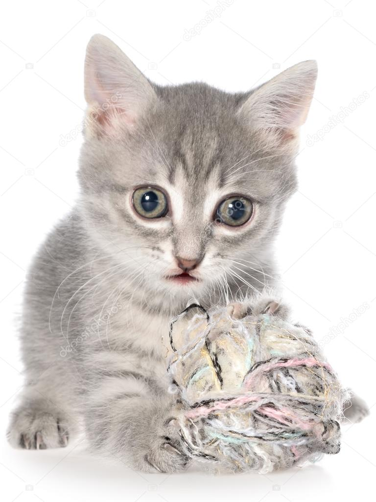 British shorthair tabby kitten lay and plays with ball of yarn