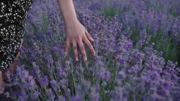 A kéz megérinti a virágok a vad mezőn.nő sétál a nyári mezőn.Woman kezek közelről megérinti virágok. Nyugi. Aromaterápia