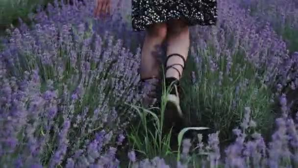Hippie dívka procházky v levandulovém poli, svoboda koncept