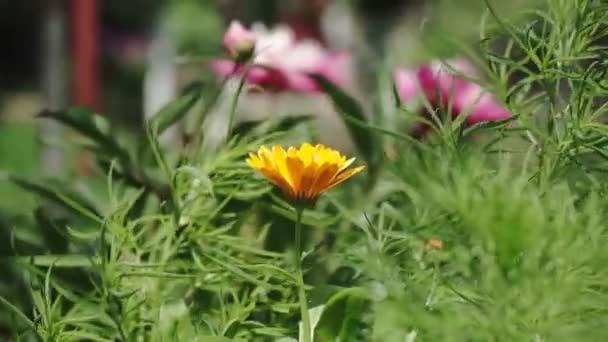 Blühende gelbe Blumen. Nahaufnahme von schönen gelben Blumen im Garten.