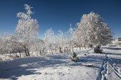 alberi congelati