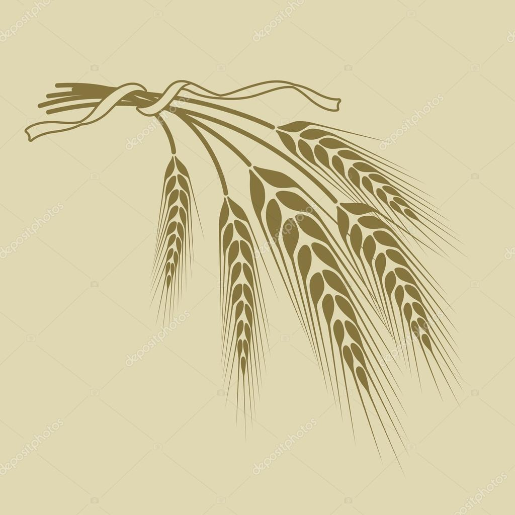 spikelets of wheat tied with a ribbon on a beige background