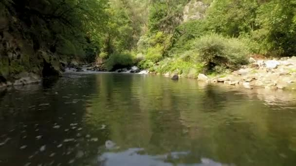 Low, slow flight over a mountain river upstream. Wildlife In Bulgaria. Blue cold water of a mountain river.