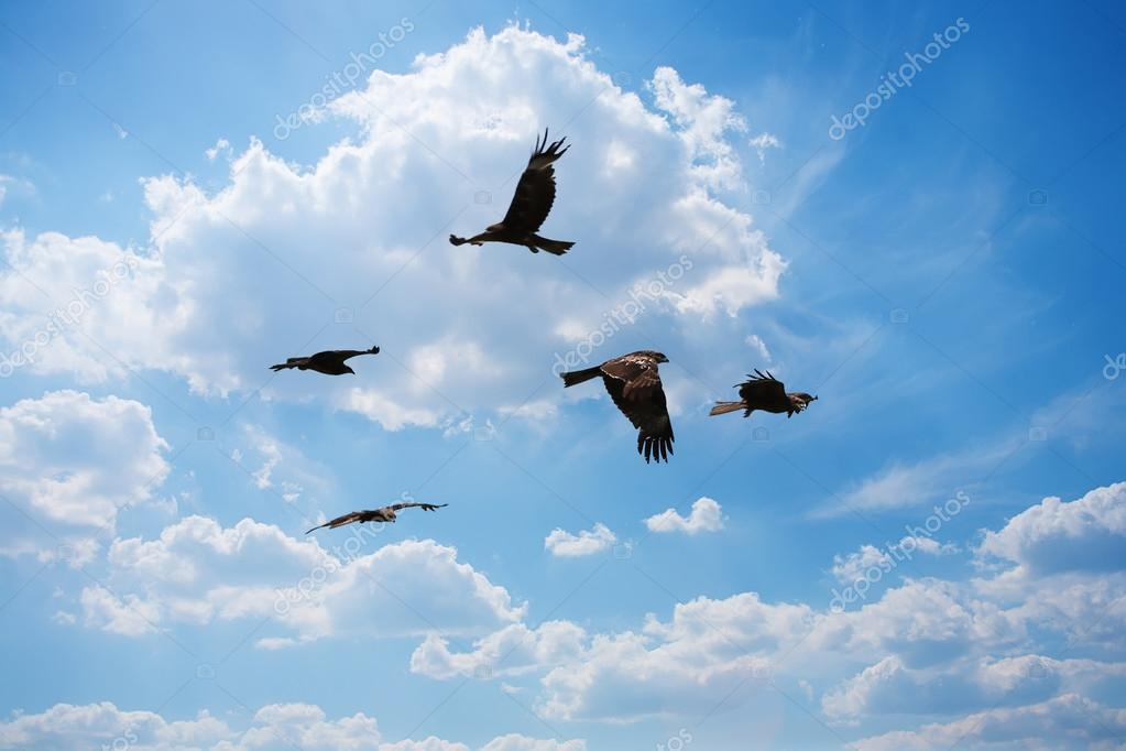 eagles flying in sky
