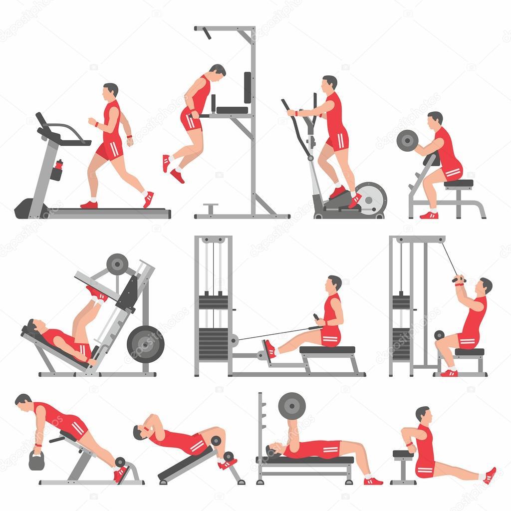 Тренажерный зал комплекс упражнений в картинках