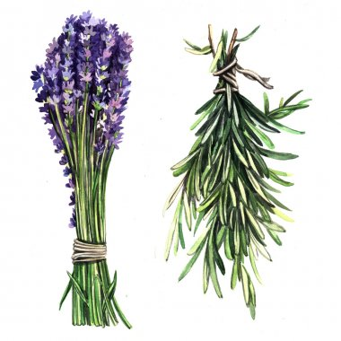 Watercolor herbs Lavender and rosemary