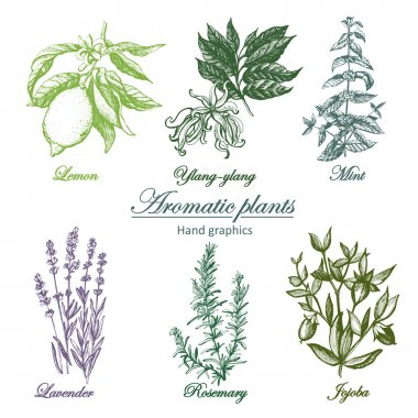 Set of aromatic herbs image