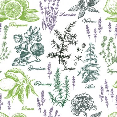 pattern with aromatic plants
