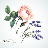 Watercolor rose and lavander