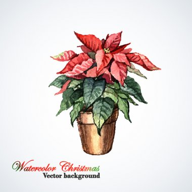 Watercolor Christmas flower Poinsettia